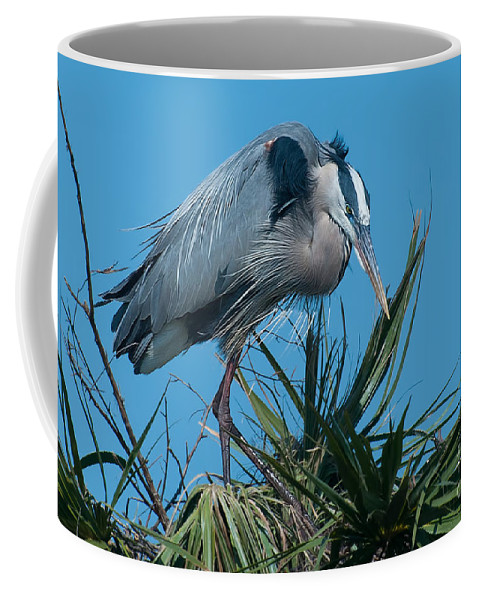 Female Coffee Mug featuring the photograph Dancing by Photos By Cassandra