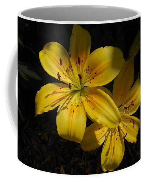 Yellow Lilies Coffee Mug featuring the photograph Day Lily by Mim White