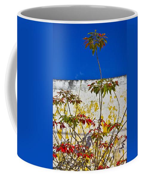 Diva Coffee Mug featuring the photograph Diva by Skip Hunt