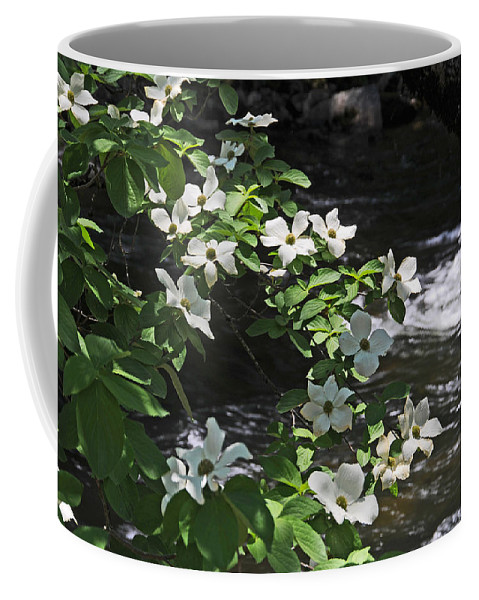 Dogwood Flowers Coffee Mug featuring the photograph Dogwoods In Yosemite by Lynn Bauer