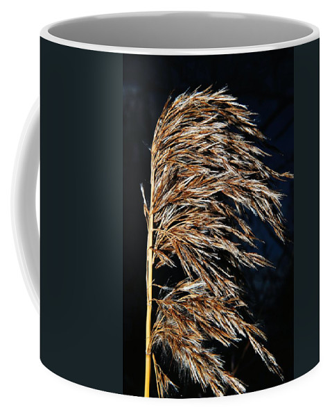 Dry Coffee Mug featuring the photograph Dry Grass by FL collection