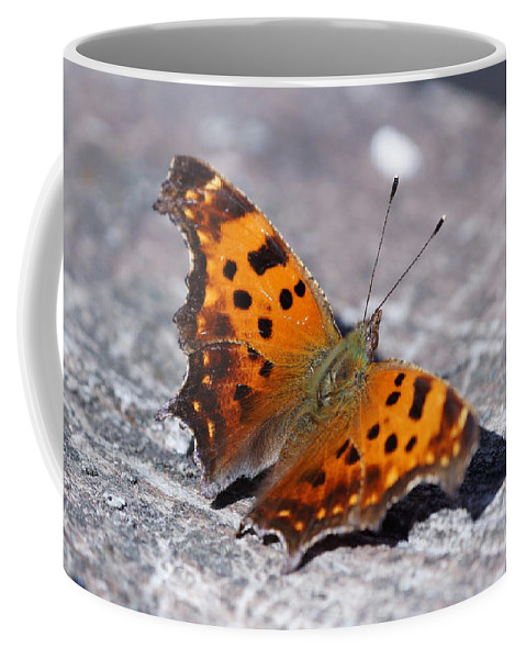 Butterfly Coffee Mug featuring the photograph Eastern Comma Butterfly by Lori Tordsen