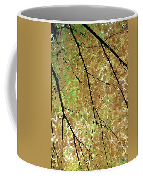 Fall Coffee Mug featuring the photograph Fall Tree by Valentino Visentini