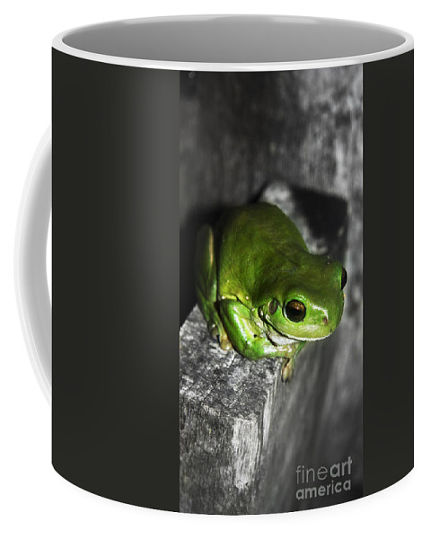 Amphibian Coffee Mug featuring the photograph Fence Frog by Jorgo Photography - Wall Art Gallery