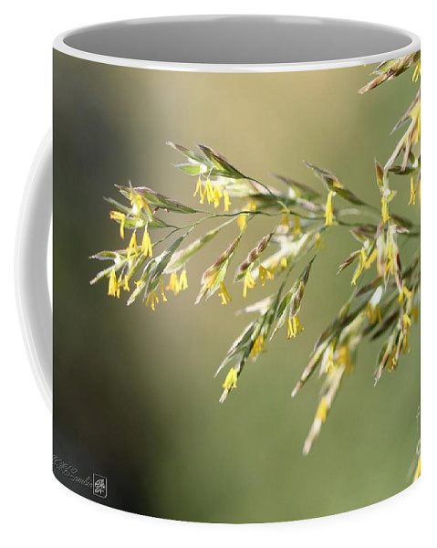 Mccombie Coffee Mug featuring the photograph Flowering Brome Grass by J McCombie