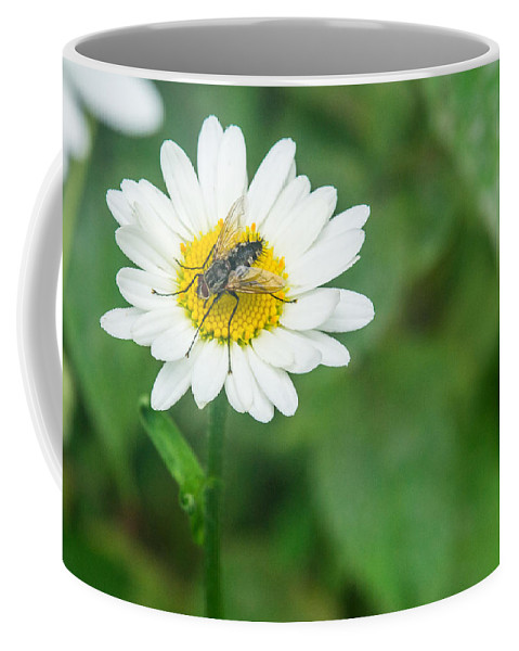 Daisy Coffee Mug featuring the photograph Fly On Daisy 3 by Douglas Barnett