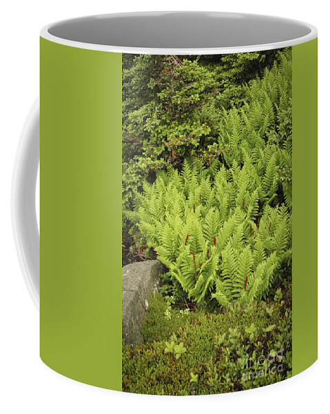 Ferns Coffee Mug featuring the photograph Forest by Alana Ranney