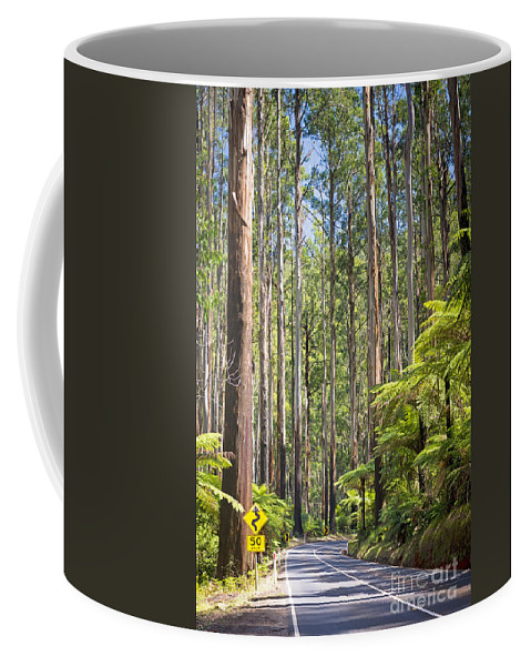 Black Coffee Mug featuring the photograph Forest Road by Tim Hester