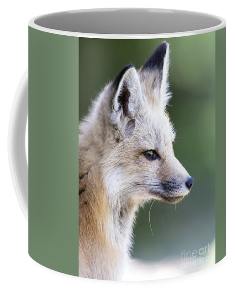 Fox Kit Coffee Mug featuring the photograph Fox Kit by Deby Dixon