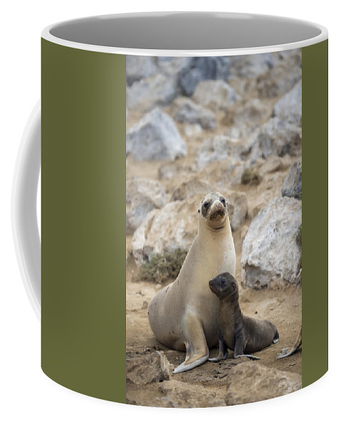 Tui De Roy Coffee Mug featuring the photograph Galapagos Sea Lion And Pup Champion by Tui De Roy