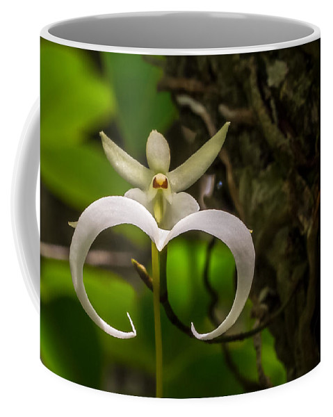 Ghost Orchid Coffee Mug featuring the photograph Ghost Orchid by Dennis Goodman