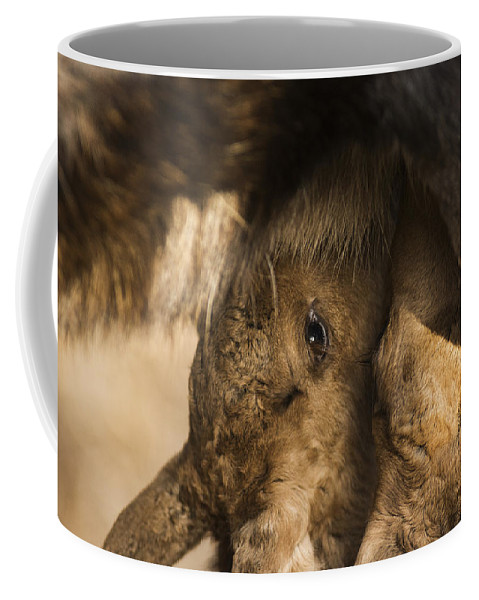 Moose Coffee Mug featuring the photograph Got Milk by Ted Raynor