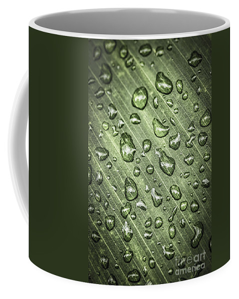 Plant Coffee Mug featuring the photograph Green Leaf With Raindrops by Elena Elisseeva