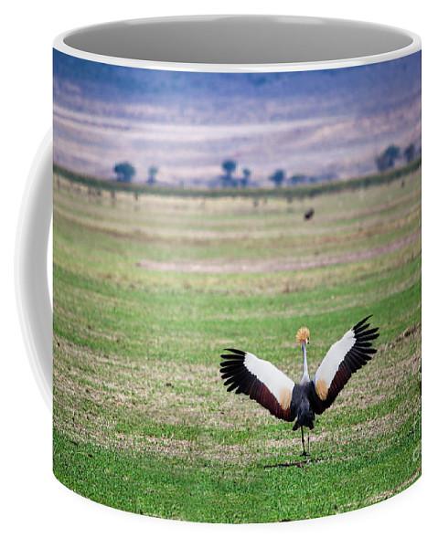 Crane Coffee Mug featuring the photograph Grey Crowned Crane. The National Bird Of Uganda by Michal Bednarek