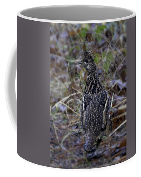 Grouse Coffee Mug featuring the photograph Grouse by Betty Depee