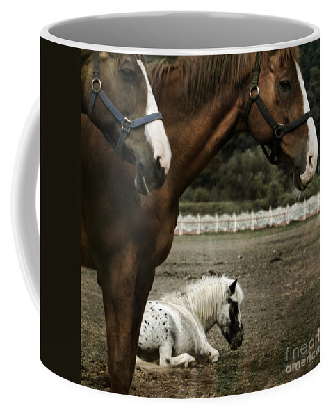 Appaloosa Coffee Mug featuring the photograph Having A Rest by Angel Tarantella