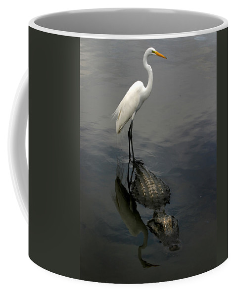 Alligator Coffee Mug featuring the photograph Hitch Hiker by Anthony Jones