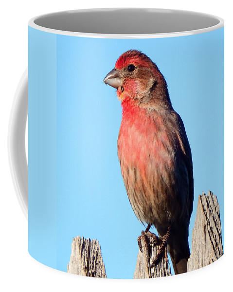 House Coffee Mug featuring the photograph House Finch by David G Paul