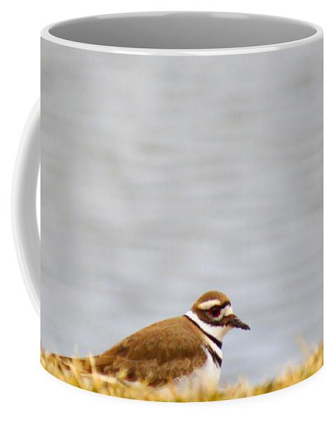 Killdeer Coffee Mug featuring the photograph Killdeer by Art Dingo