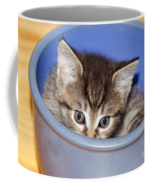 Adorable Coffee Mug featuring the photograph Kitten by Michal Boubin