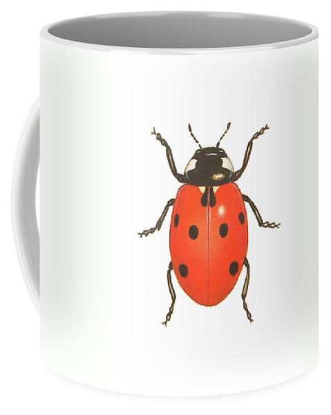 Beetle Coffee Mug featuring the drawing Ladybug by Pati Photography