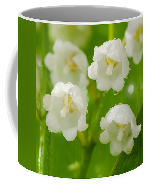 Valley Coffee Mug featuring the photograph Lily Of The Valley by TouTouke A Y