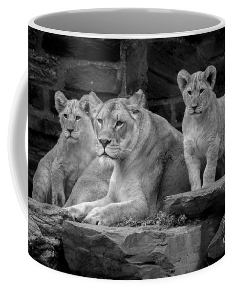 Lion Coffee Mug featuring the photograph Lioness And Cubs by David Rucker
