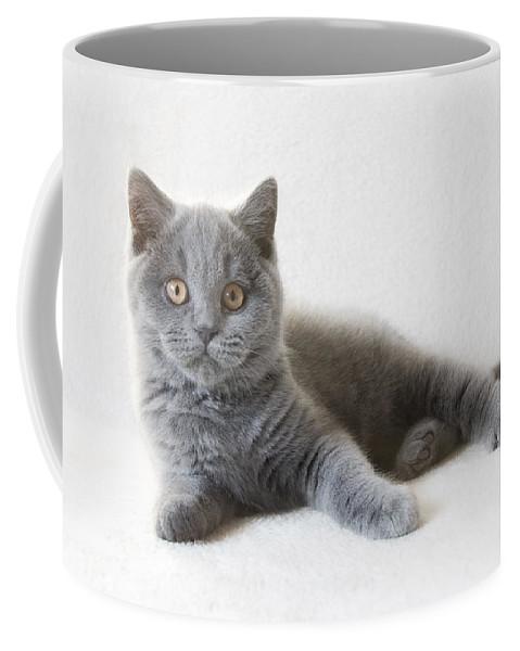 Katze Coffee Mug featuring the pyrography Little Friend by Steffen Gierok
