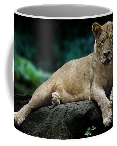 Animal Coffee Mug featuring the photograph Look At Me by Ben Yassa