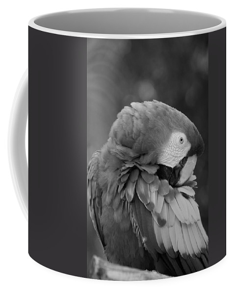 Macaws Coffee Mug featuring the photograph Macaws Of Color B W 17 by Rob Hans