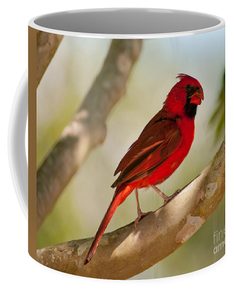 Red Coffee Mug featuring the photograph Male Cardinal by Stephen Whalen