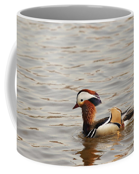 Duck Coffee Mug featuring the photograph Mandarin Duck by Michal Boubin