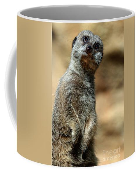 Meerkat Coffee Mug featuring the photograph Meerkat by Jill Battaglia