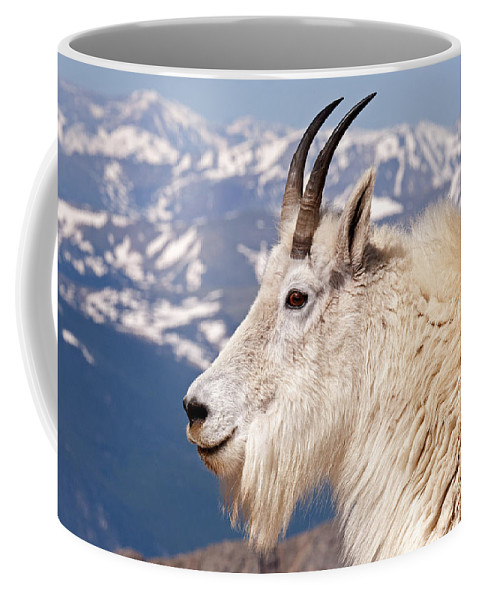 Arapaho National Forest Coffee Mug featuring the photograph Mountain Goat Portrait On Mount Evans by Fred Stearns