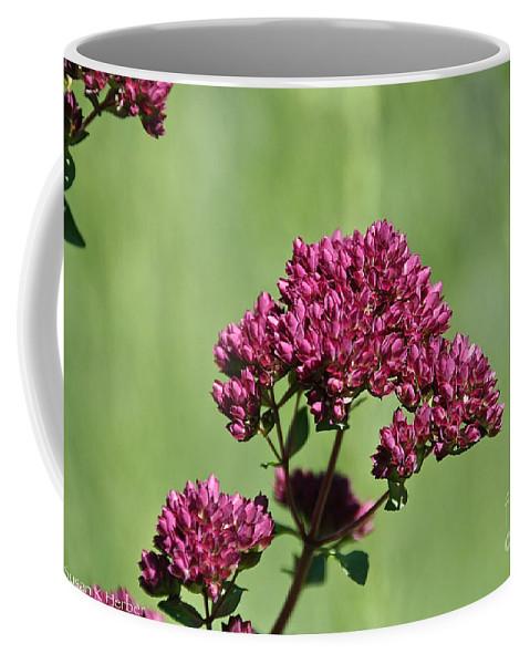 Flower Coffee Mug featuring the photograph Oregano by Susan Herber