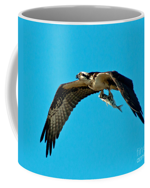 Osprey Coffee Mug featuring the photograph Osprey With Catch by Stephen Whalen