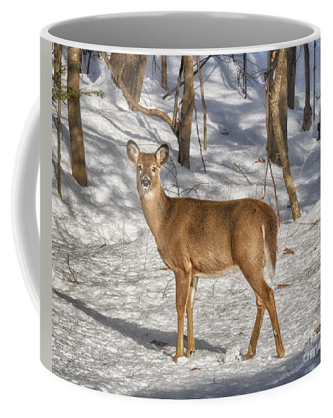 Deer Coffee Mug featuring the photograph Passing By by Claudia Kuhn