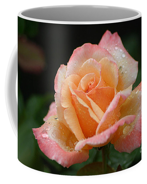 Rose Coffee Mug featuring the photograph Peaches And Cream by Living Color Photography Lorraine Lynch
