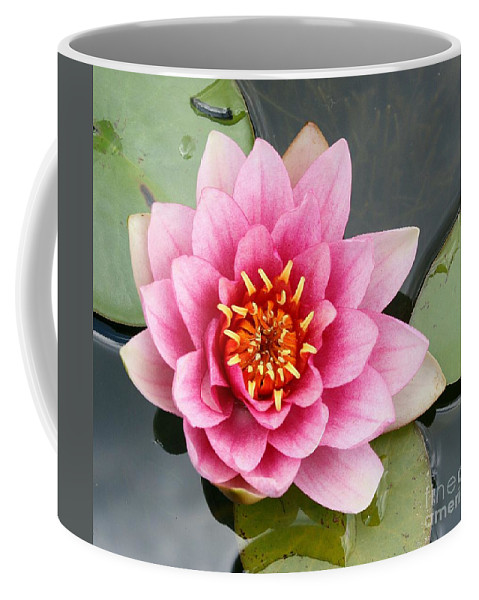 Lily Coffee Mug featuring the photograph Pink Waterlily by Christiane Schulze Art And Photography