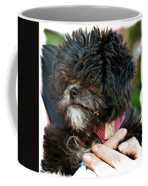 Ragamuffin Coffee Mug featuring the photograph Ragamuffin by Steve Harrington