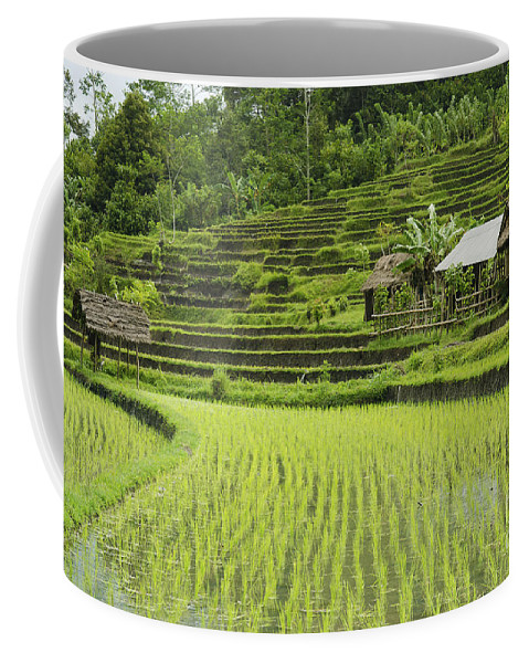 Agriculture Coffee Mug featuring the photograph Rice Fields In Bali Indonesia by Jacek Malipan