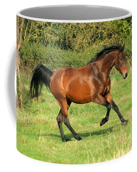 Horse Coffee Mug featuring the photograph Run Run by Angel Tarantella