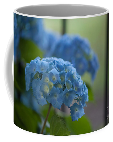 Hydrangea Coffee Mug featuring the photograph Soft Blue Hydrangea by Mike Reid