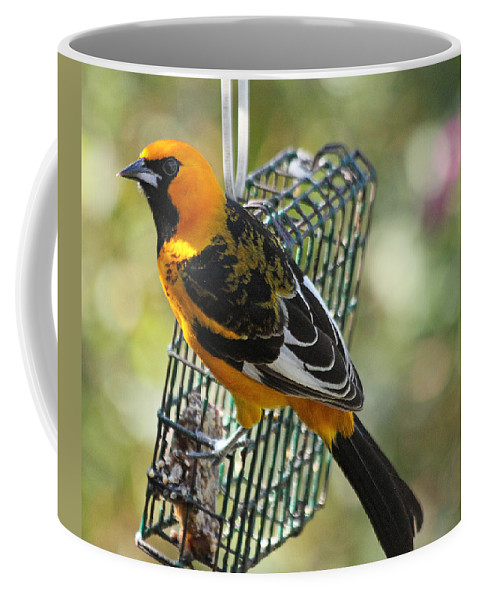 Birds Coffee Mug featuring the photograph Spot Breasted Oriole by Dart and Suze Humeston