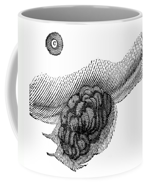 1833 Coffee Mug featuring the photograph St. Martins Fistula by Granger