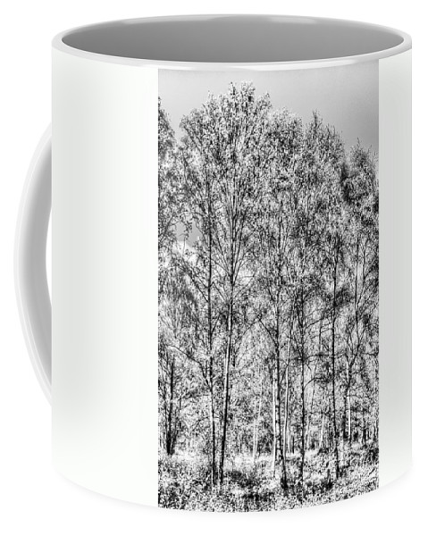 Forest Coffee Mug featuring the photograph Summer Forest Trees by David Pyatt