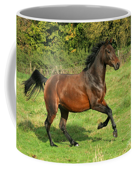 Horse Coffee Mug featuring the photograph Take-off by Angel Ciesniarska