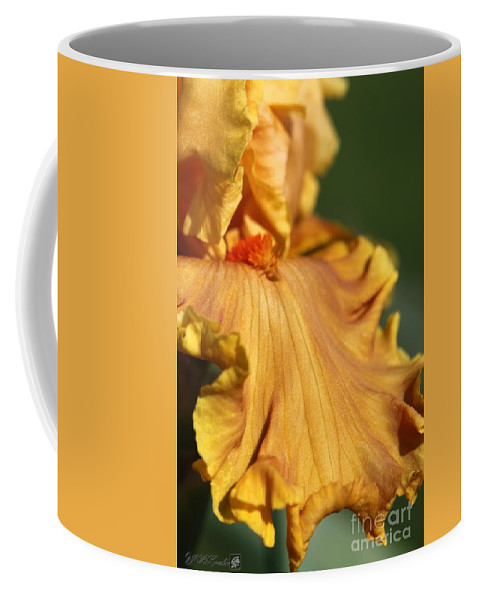 Mccombie Coffee Mug featuring the photograph Tall Bearded Iris Named Penny Lane by J McCombie