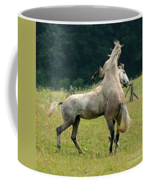 Horse Coffee Mug featuring the photograph The Fight by Angel Ciesniarska