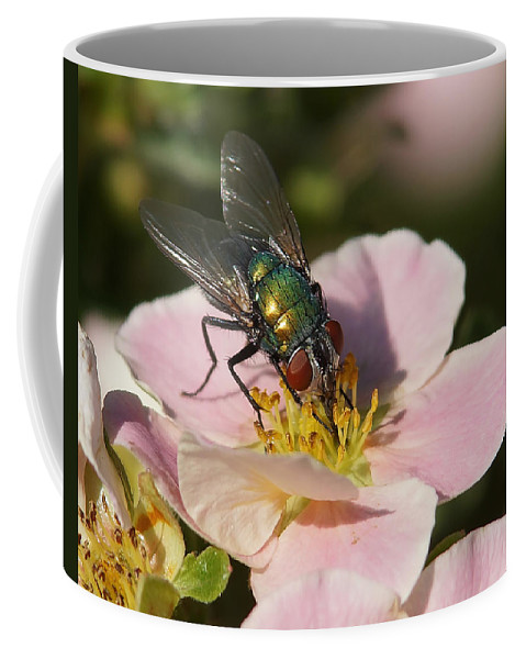 Flies Coffee Mug featuring the photograph The Fly by Ernie Echols